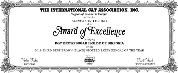 2018 THIRD BEST BROWN (BLACK) SPOTTED TABBY BENGAL OF THE YEAR